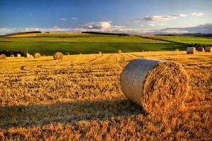 agricoltura-fieno_800x532