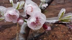 gelate-aprile