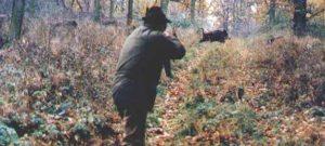 caccia-cinghiali